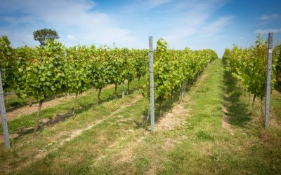 The unstoppable rise of English wine