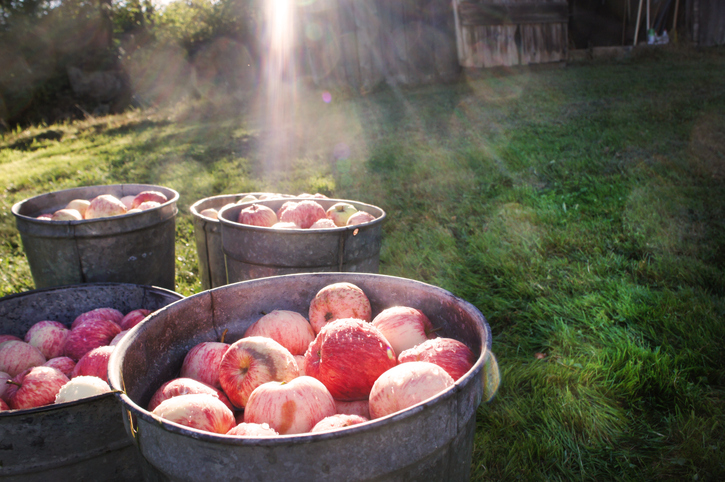The UK's growing love for cider